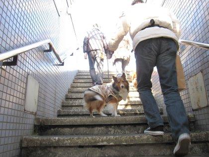 階段がツライのは年とった印でつよぉぉぉ
