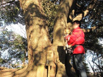 次の修行はこの大木を飛び越えるでつよぉぉぉ