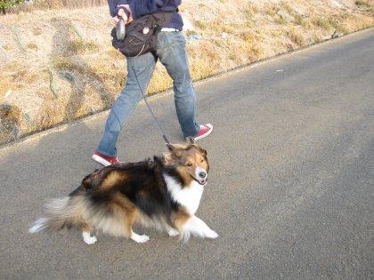 見て見て~っ テン子いい仔にして歩くでつよ だから笑うでつよ!