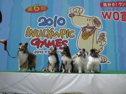 イヌリンピック2010 お写真16