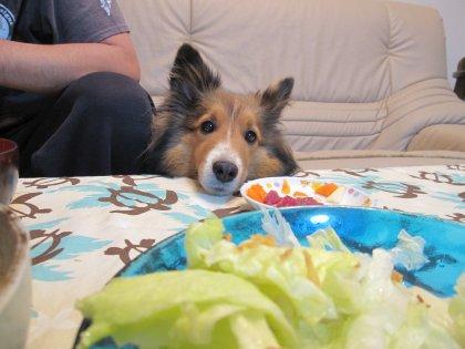 お料理が並んだのにガッツリ食べれないんでつよ
