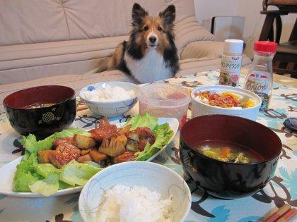 お夕飯の時くらいお隣さんは放っておくでつよーっ!