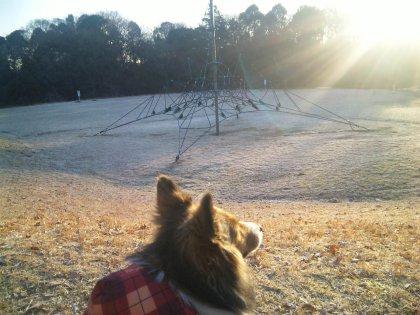 朝の公園の芝生はしろぉぉぉいんでつねぇ