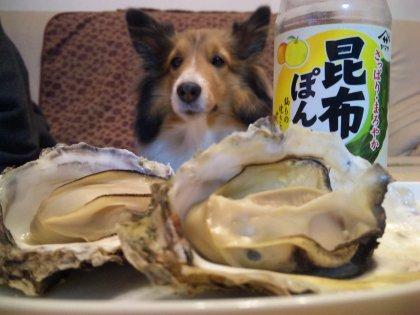 この残った貝殻は今年の新作ビキニにするでつよwエコエコ♪