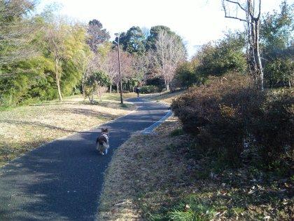 3月14日朝のお散歩4