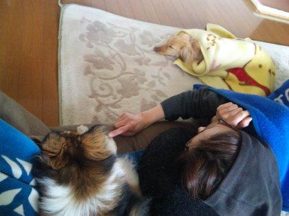 今日は寒かったので。。みんなでギリギリな距離で寄り合ってお昼寝したでつよ