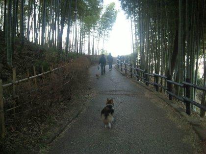 今年こそ竹の子堀りに来るでつよ!