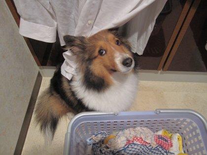 お洗濯物ののれんが大好きでつ♪(濡れますよ。。)