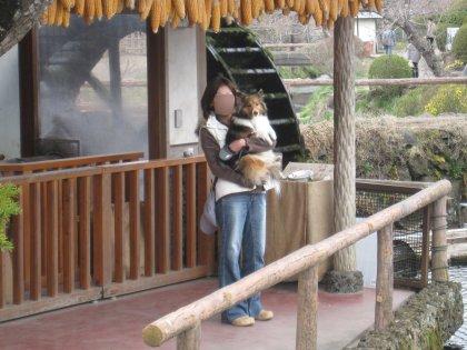 日本家屋が好きなんでつよ、うちのママ。さすが前世がくのいちな女でつねぇ^^;