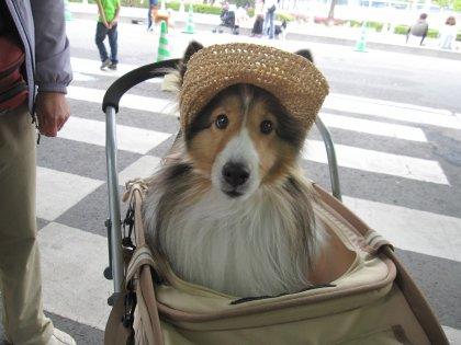 ママさん手作りのお帽子がとっても可愛かったでつよ、レモンちゃん♪