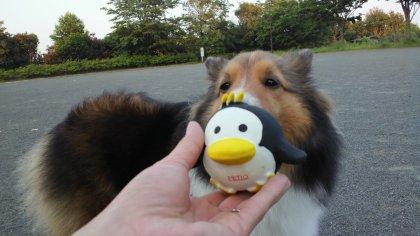 このペンギンで何をしろと言うのでつか?