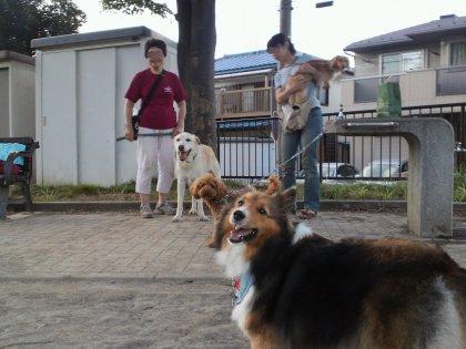 お見舞い散歩 2011,7