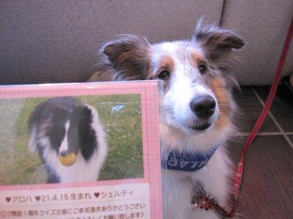 雛菊さま あたくしが持参した雛菊さまの関東のお友達(アロハちゃん)と2ショット☆