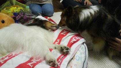 2011・10・2 おじちゃま&姪の2ショット