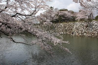 110409sakura041.jpg