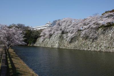 110412sakura061.jpg