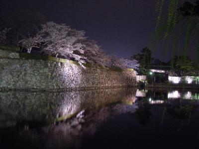 20110409yozakura040.jpg