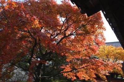 toufukuji012.jpg