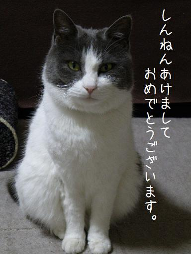 2008_12310056.jpg