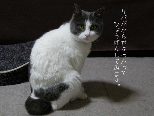 2008_12310063.jpg