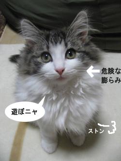 1IMG_6919.jpg