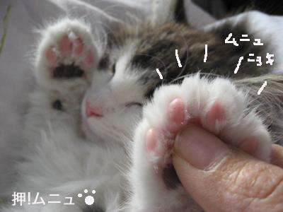 にょきにょき5555IMG_3351