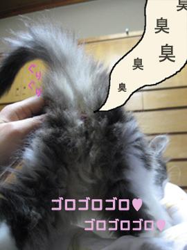 1おしりMG_3421