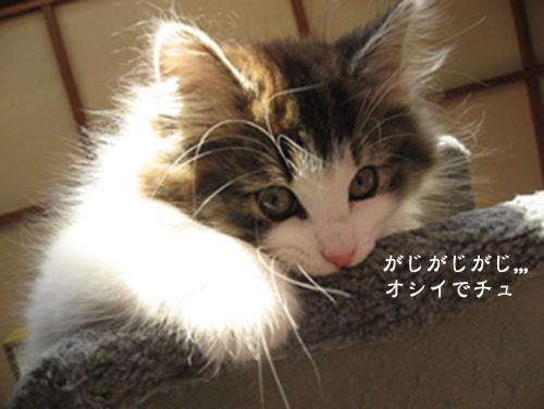 文字入りIMG_3483