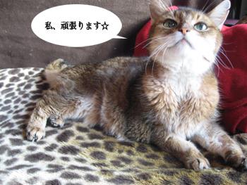 にーなIMG_5766