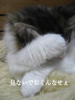 5IMG_5758.jpg