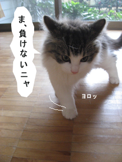 6IMG_7035.jpg