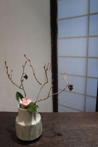土佐水木と雛侘助