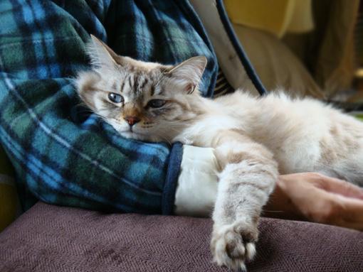 うでまくら猫2