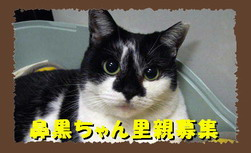 hanakuro.jpg