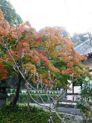 1123hanamizuki01.jpg