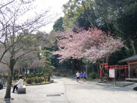 310SAKURA04.jpg
