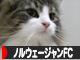 にほんブログ村 猫ブログ ノルウェージャンフォレストキャットへ ワンポチありがとうございます。