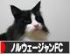 にほんブ<br />ログ村 猫ブログ ノルウェージャンフォレストキャットへ ワンポチありがとうございます。