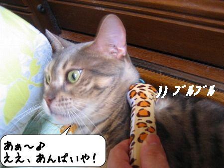 20091011_162809.jpg