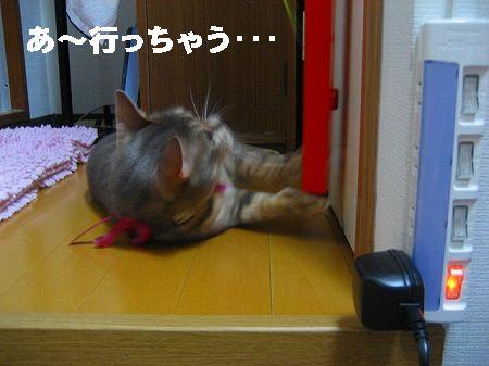 IMG_3780-1.jpg