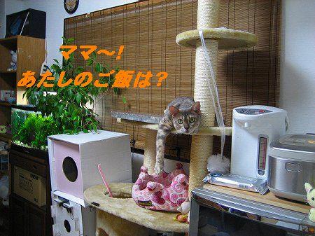 IMG_4340-1.jpg