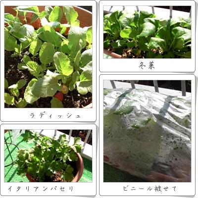 1月の野菜達