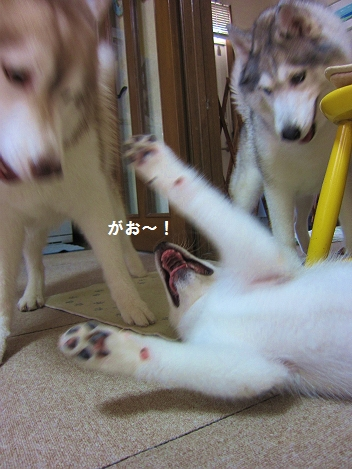 IMG_0052_20101019204959.jpg