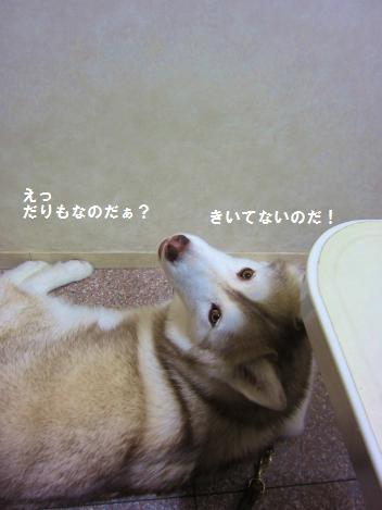 IMG_2682_20110106223105.jpg