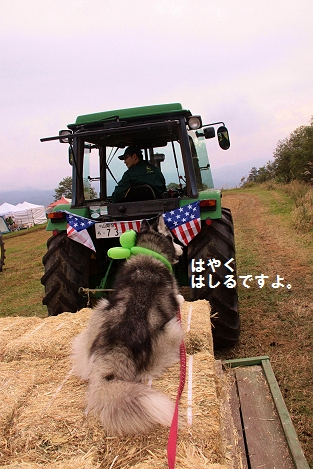 IMG_3112_20101020230846.jpg