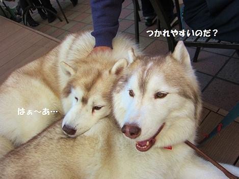 IMG_4879.jpg