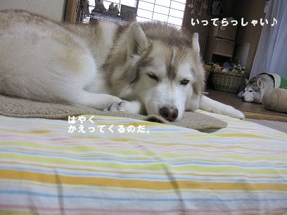 IMG_6054_20100120212105.jpg