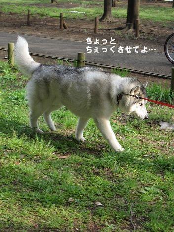 IMG_9094.jpg
