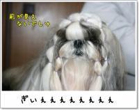 2008_1125_191235AA.jpg