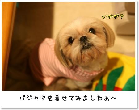 2008_1129_170901AA.jpg